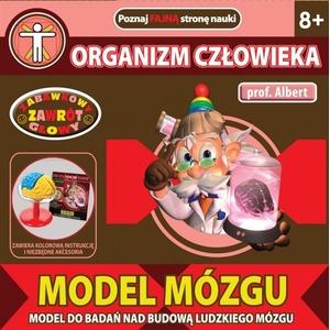 Model Mózgu Profesor Albert - Dromader